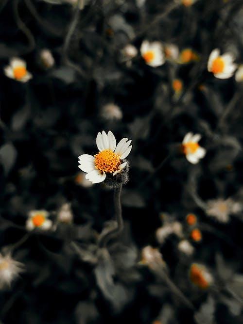 Photos gratuites de beauté dans la nature, belle fleur, belle nature