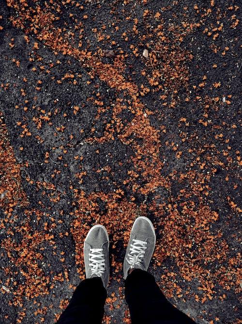 Photos gratuites de aube, automne, bicolore