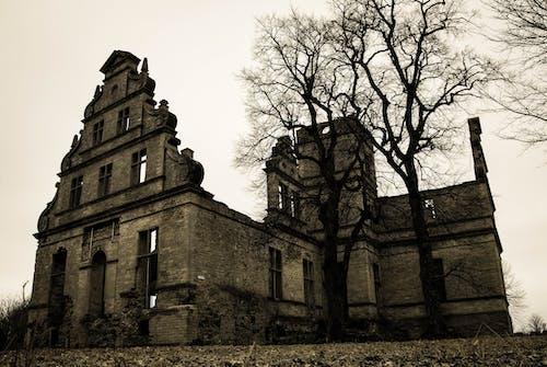 Fotos de stock gratuitas de abandonado, arboles, arquitectura, catedral