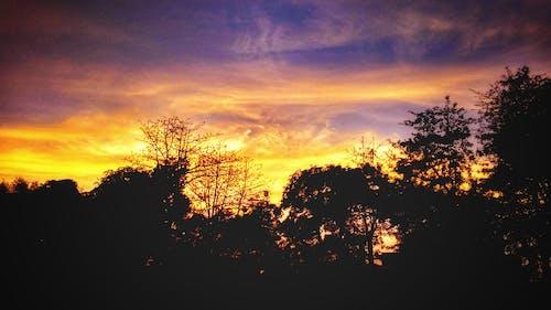 ağaç, akşam, Akşam gökyüzü, bulut oluşumu içeren Ücretsiz stok fotoğraf