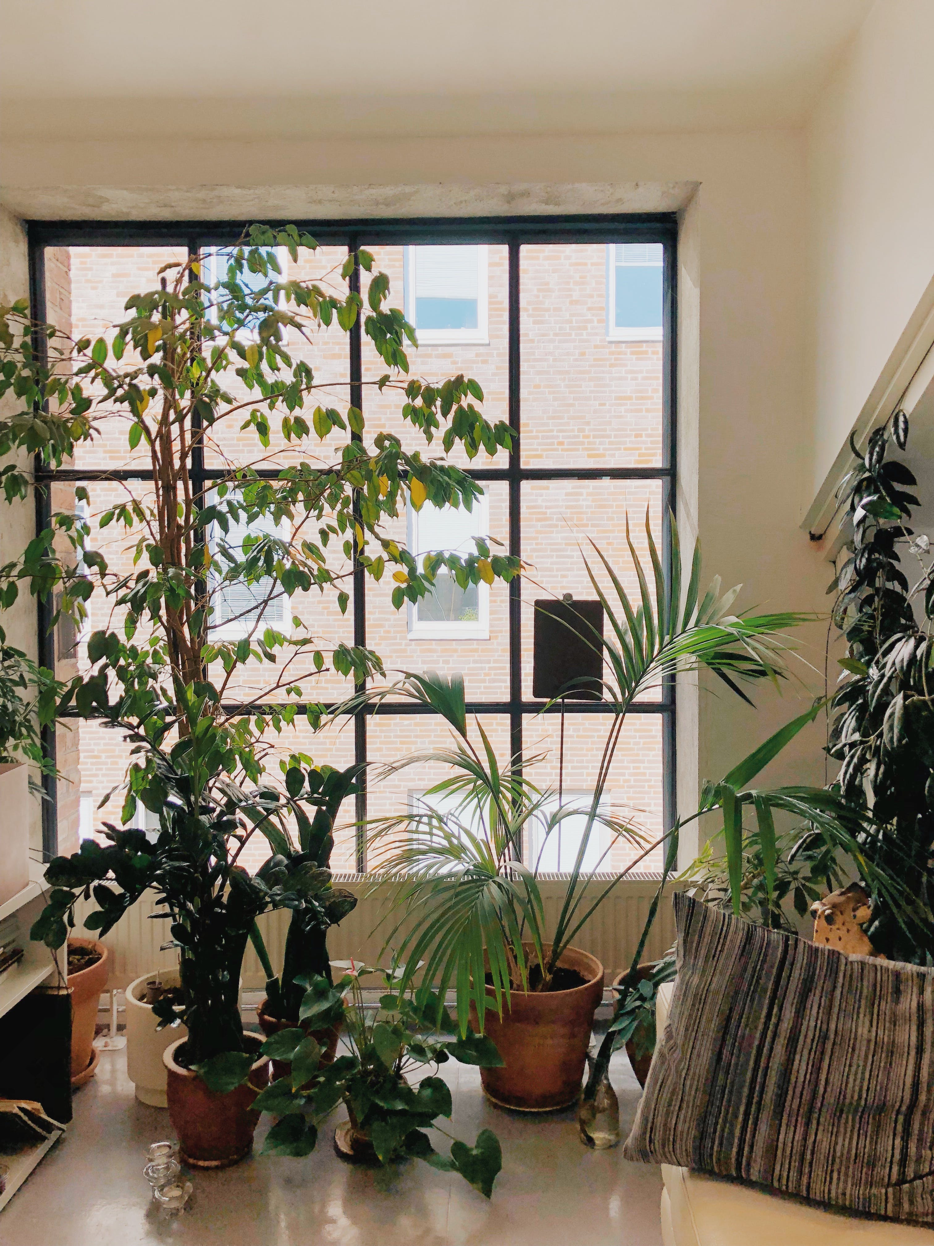 Variety of Green Leaf Plants on Table Infront of Window