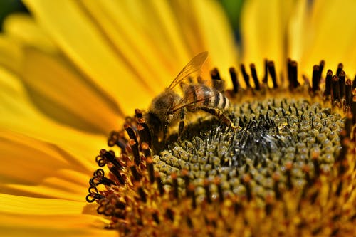 Free stock photo of bee, flowering, insect