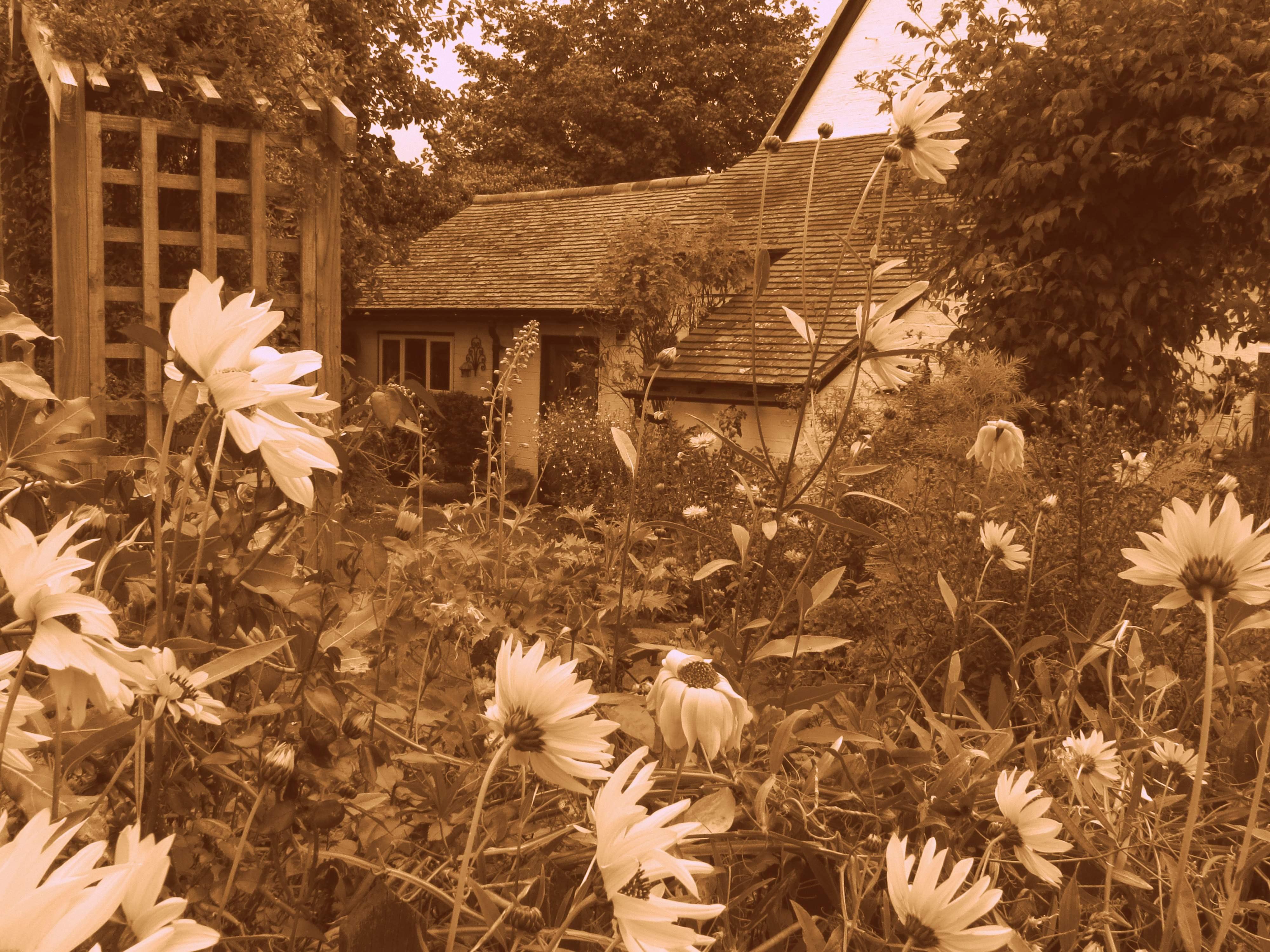 Free stock photo of cottage garden, english cottage, garden flowers