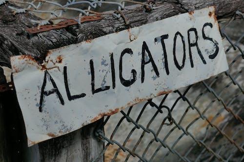 Free stock photo of alligators, sign