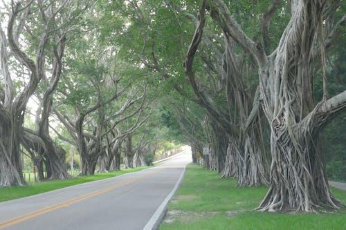 Concrete Road Beneath a Trees