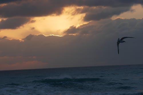 Free stock photo of beach, seagull, sunrise