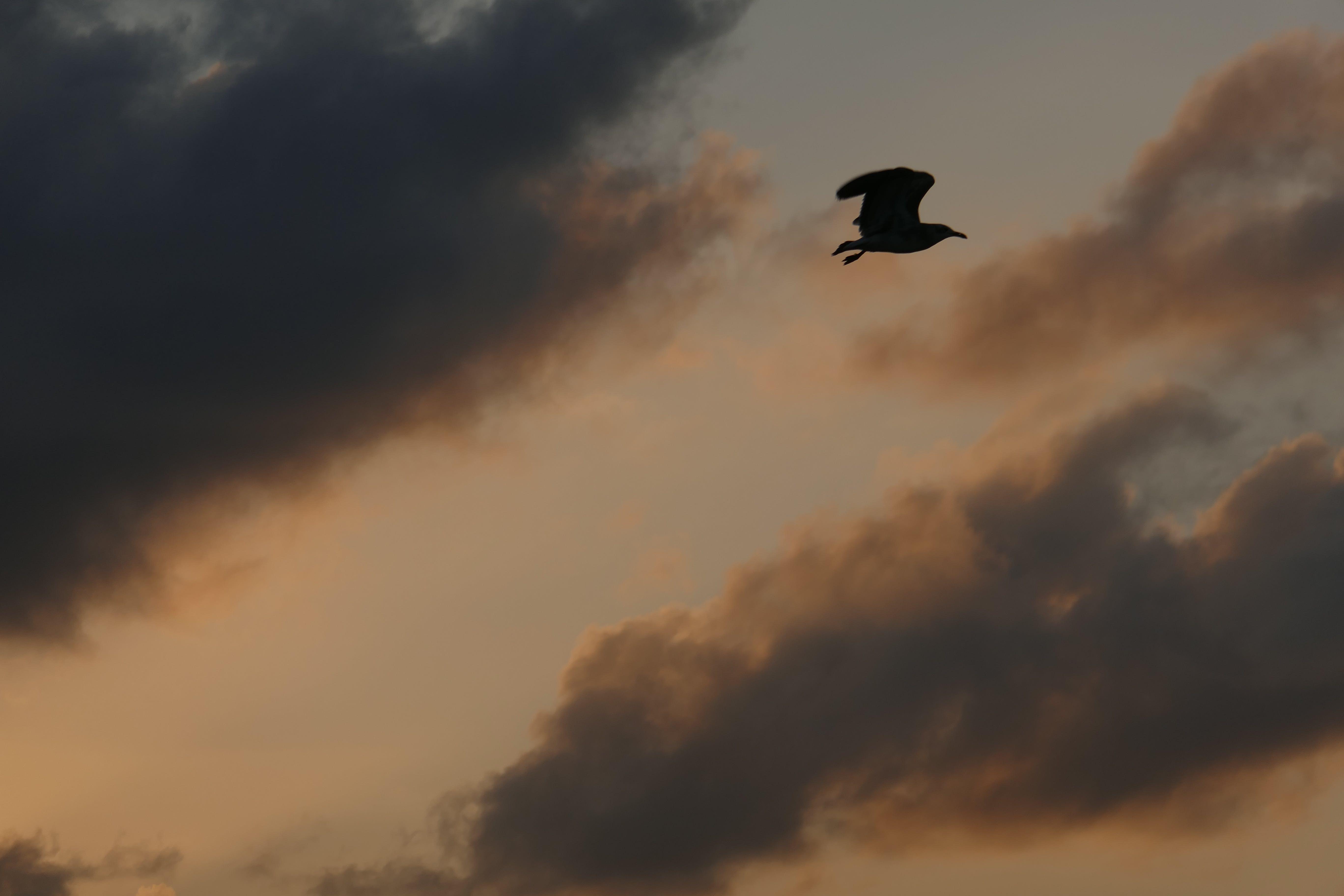 คลังภาพถ่ายฟรี ของ ชายหาด, นกนางนวล, พระอาทิตย์ขึ้น