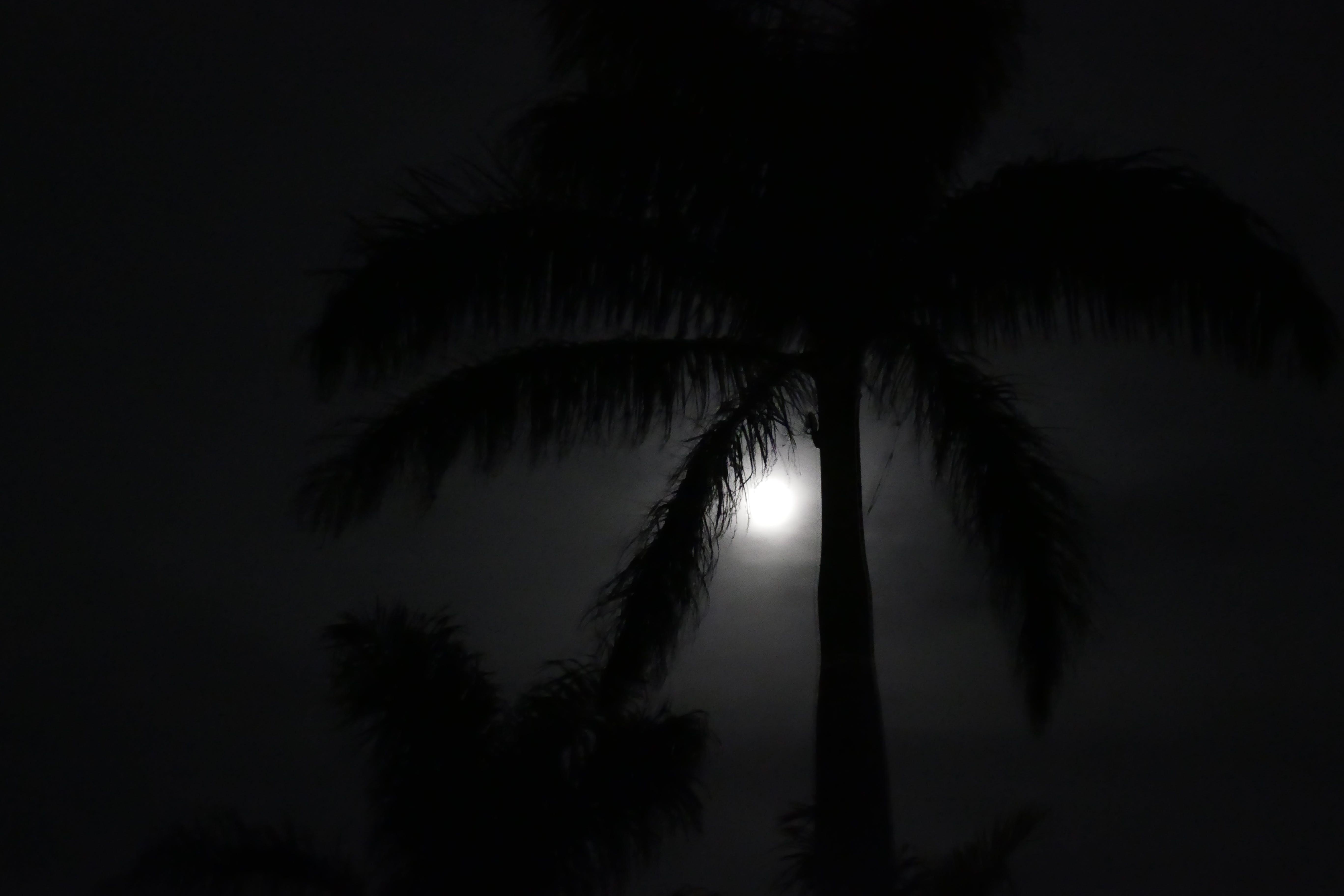 คลังภาพถ่ายฟรี ของ กลางคืน, จันทรา, ต้นปาล์ม
