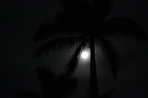 Free stock photo of moon, night, palm tree