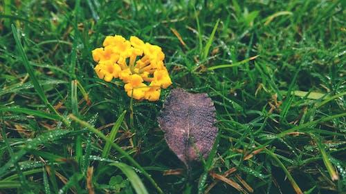 bulanık, bulanık arka plan, çan çiçeği, çiçek içeren Ücretsiz stok fotoğraf