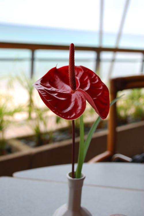 Δωρεάν στοκ φωτογραφιών με πραγματικό λουλούδι ...... ή ψεύτικο;