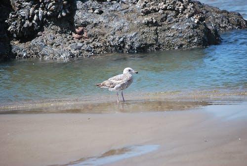 Δωρεάν στοκ φωτογραφιών με sea gal περπάτημα