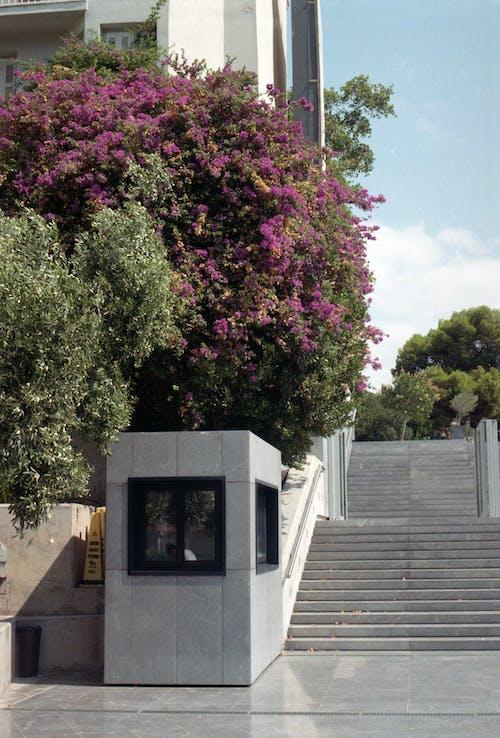 Blooming Tree Beside Building