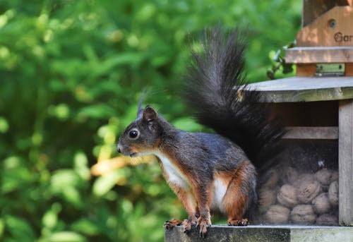 Free stock photo of rodent, squirrel