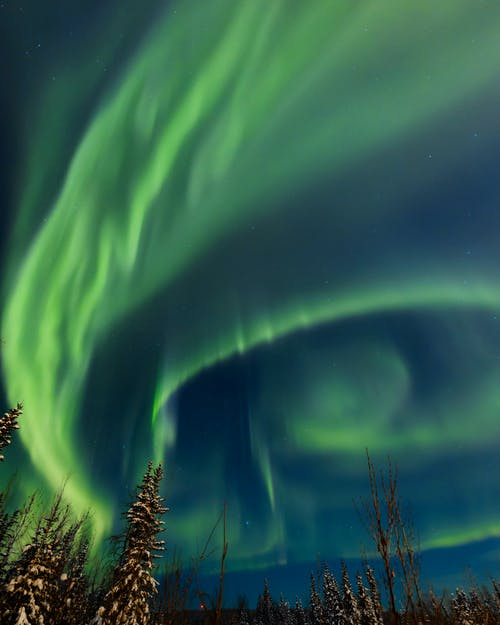 Imagine de stoc gratuită din arbore, aurora boreală, celebrități