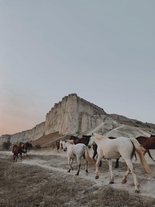 갈색 말, 마운틴 록, 말의 무료 스톡 사진