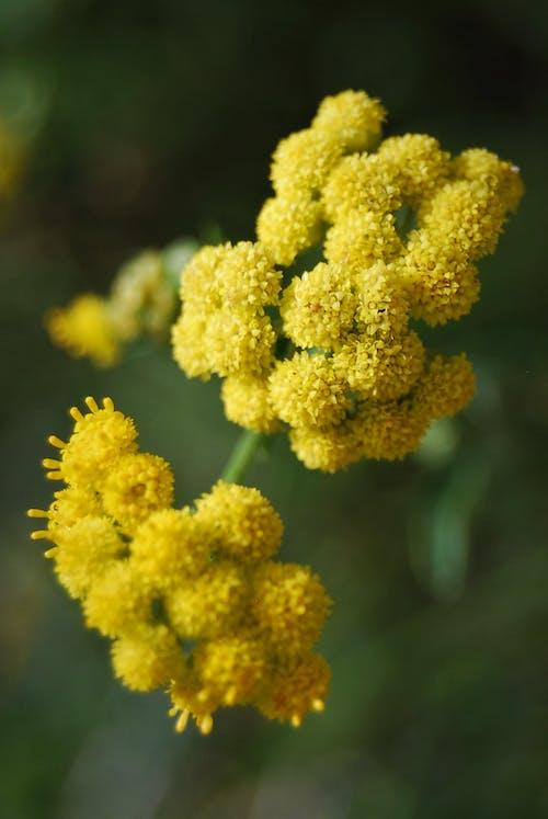 Gratis lagerfoto af blomst, grøn, gul, natur