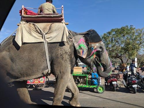 คลังภาพถ่ายฟรี ของ ช้าง, ถนน