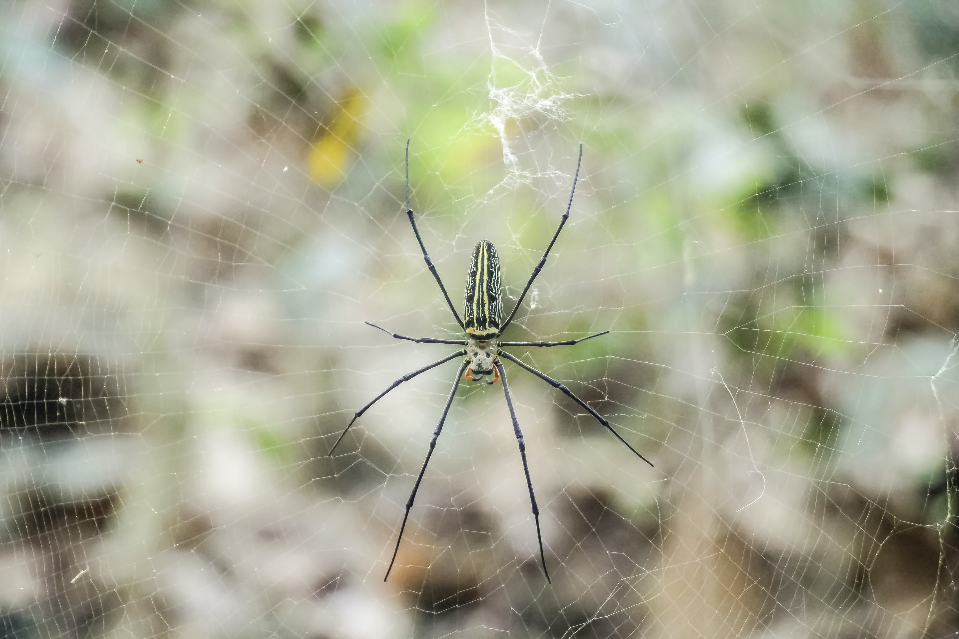 Free stock photo of nature photography, spider