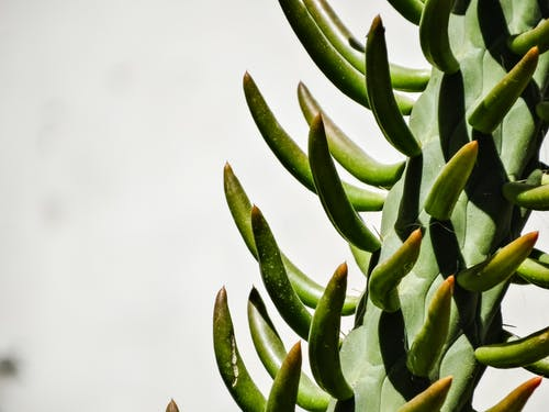 Fotobanka sbezplatnými fotkami na tému Čile, espinas, farba zelená