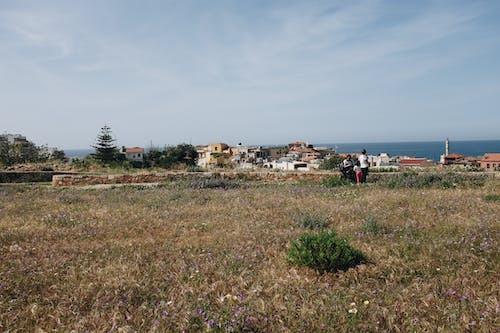 Ilmainen kuvapankkikuva tunnisteilla kasvit, kaupunkien kasveja, Kreikka, loma