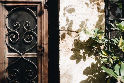 Ilmainen kuvapankkikuva tunnisteilla ikkuna, lehdet, rakennus