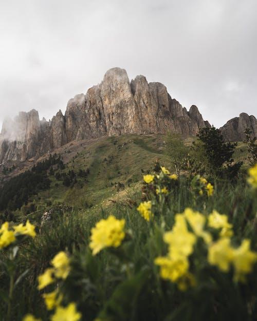 Foto profissional grátis de amarelo, ao ar livre, beleza na natureza