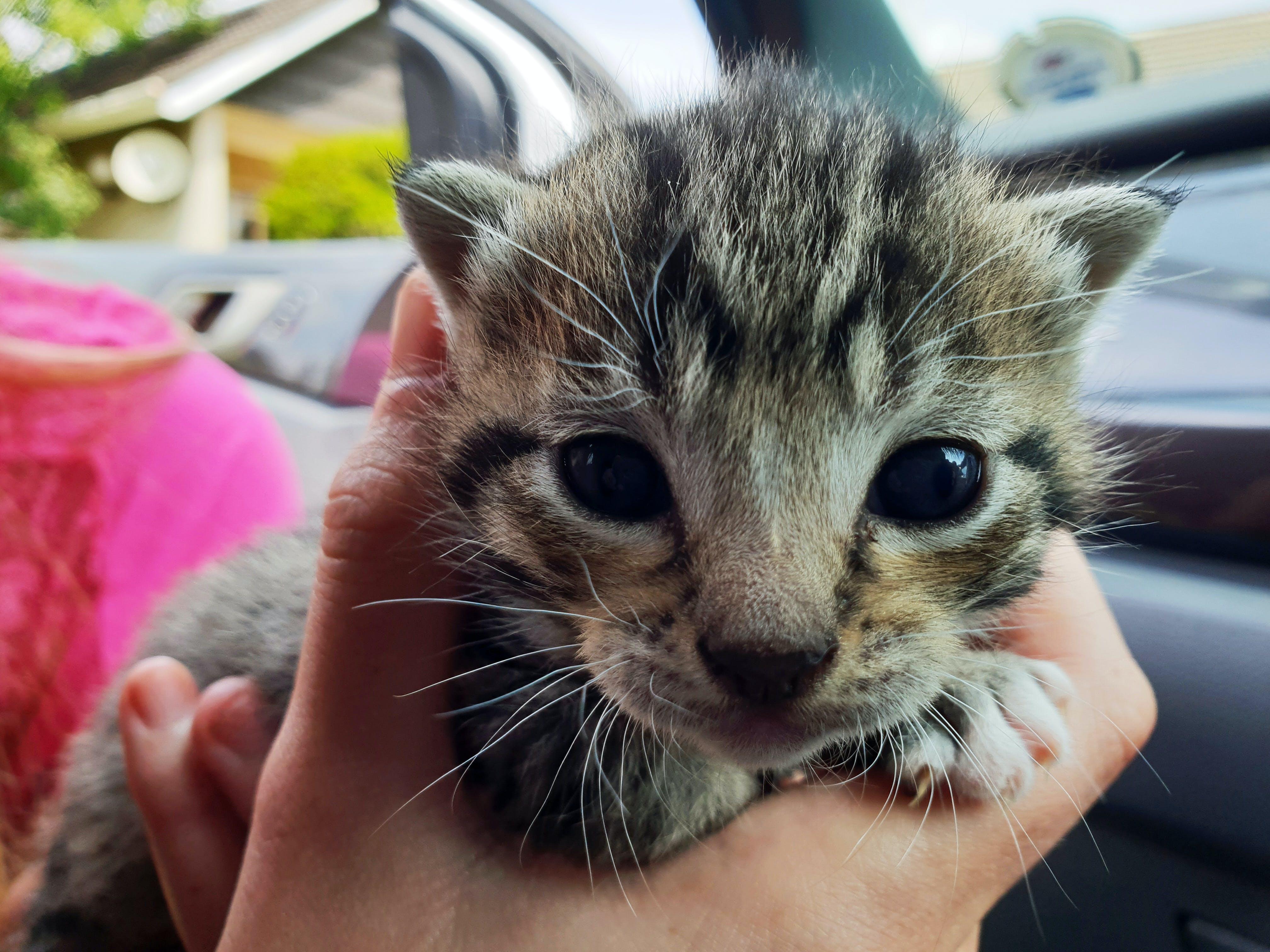 Closeup Photography of Short-fur Brown and Black Kitten
