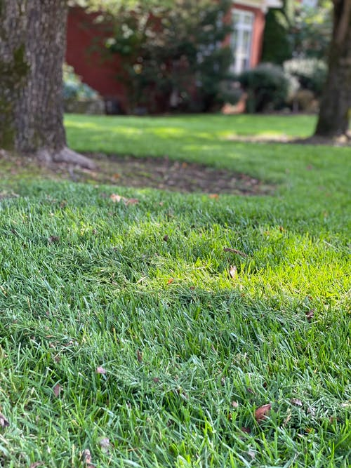 Free stock photo of freshly mown grass, front yard, grass