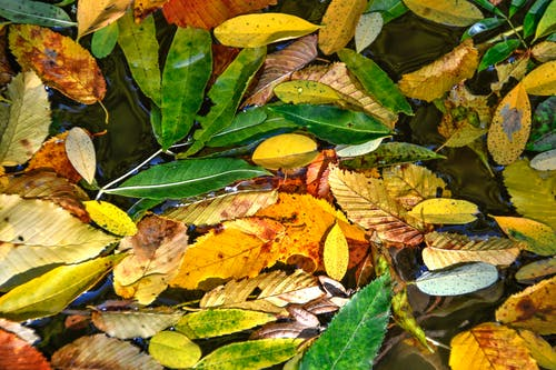 Fotobanka sbezplatnými fotkami na tému botanika, burgundské, červená