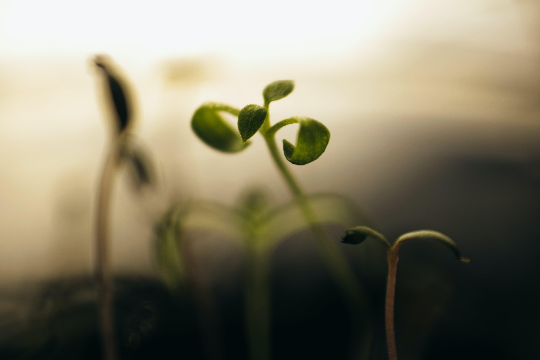 Foto d'estoc gratuïta de borrós, concentrar-se, creixement, desenfocament