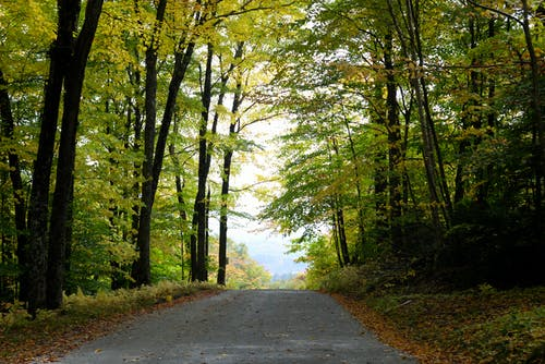 Free stock photo of fall, fall foliage, leaves