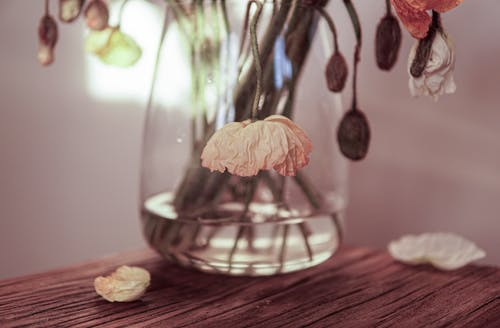 Clear Glass Jar With White Flower