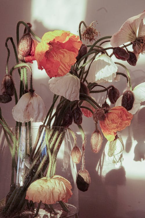 Pink and White Moth Orchids in Clear Glass Vase