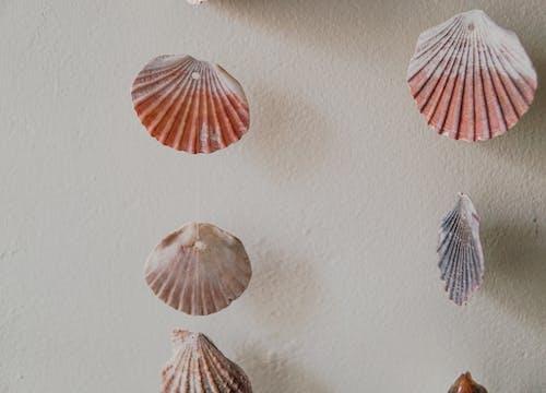 Brown and White Umbrella Wall Decor