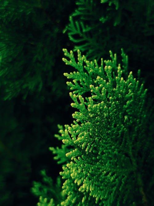 Photos gratuites de à feuilles persistantes, aquatique, arbre