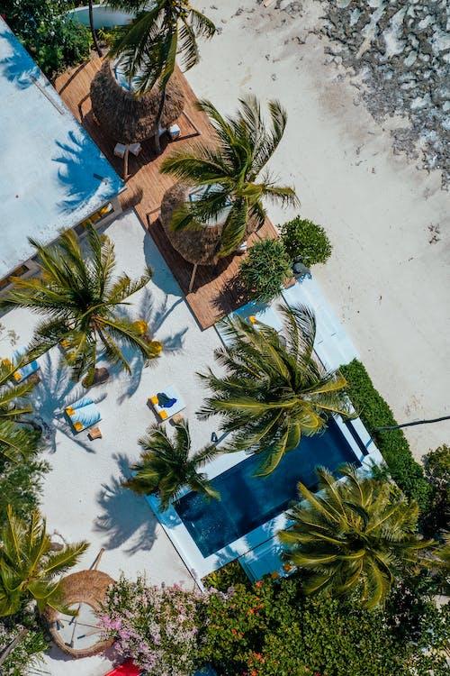 คลังภาพถ่ายฟรี ของ ชายหาด, ด้านบนโดยตรง, ต้นปาล์ม