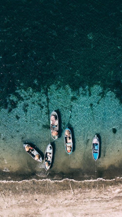 Foto d'estoc gratuïta de algues, barca, directament a dalt