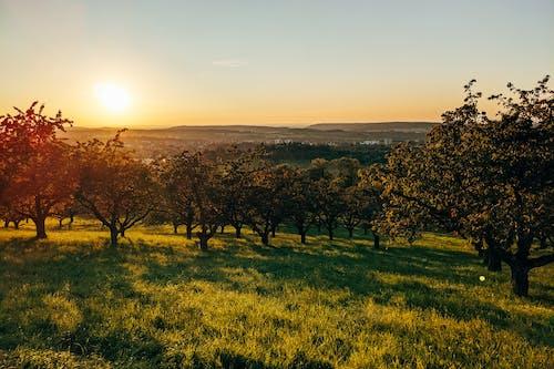 Darmowe zdjęcie z galerii z apple, Badenia-Wirtembergia, bujny