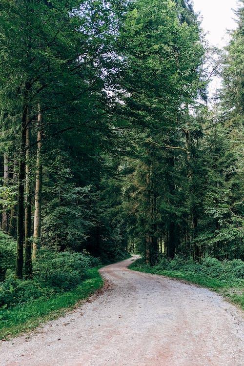 Darmowe zdjęcie z galerii z Badenia-Wirtembergia, burgbach, burgbachwasserfall