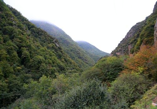 Free stock photo of autumn forest, giant mountains, go green