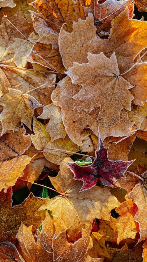 Ảnh lưu trữ miễn phí về lá, môi trường, mùa đông