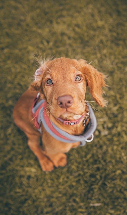 Immagine gratuita di animale, animali domestici, cane domestico