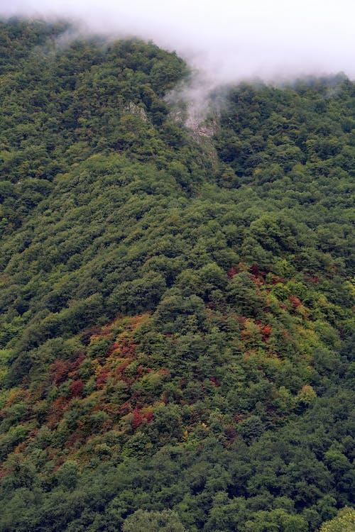 Free stock photo of autumn, autumn forest, autumn mood forest