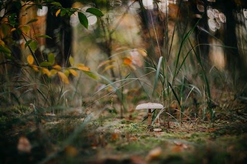 Ilmainen kuvapankkikuva tunnisteilla alhainen kulma, blured, kasvit