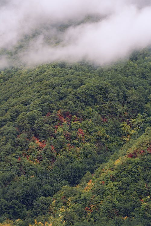 Free stock photo of arctic nature, autumn, autumn atmosphere