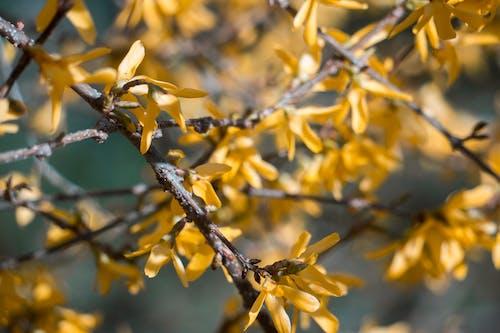 Fotobanka sbezplatnými fotkami na tému kvety, príroda, slnečný, žltá