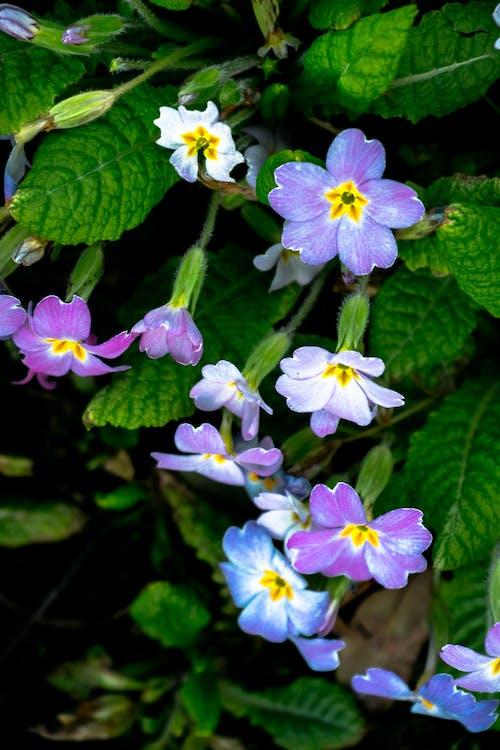 flors, natura, naturalesa
