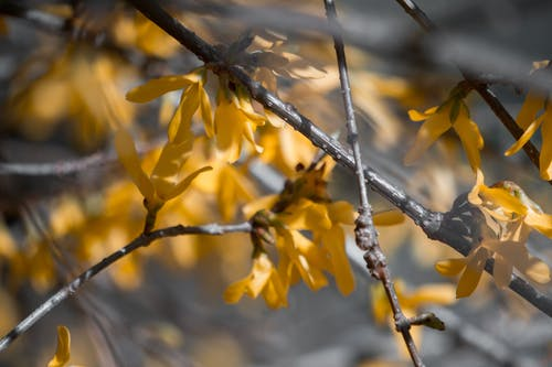 Fotobanka sbezplatnými fotkami na tému kvety, príroda, slnko, žltá