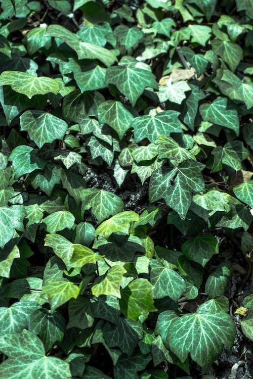 Darmowe zdjęcie z galerii z las, natura, zielony